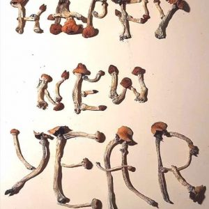 Psilocybin (Magic Mushrooms)